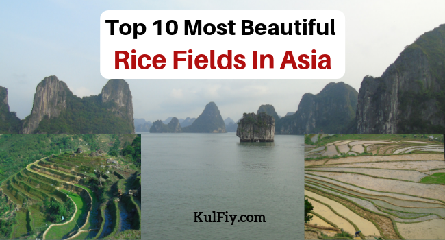 Beautiful Rice Fields In Asia