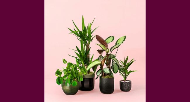 Plants at Moyses Stevens