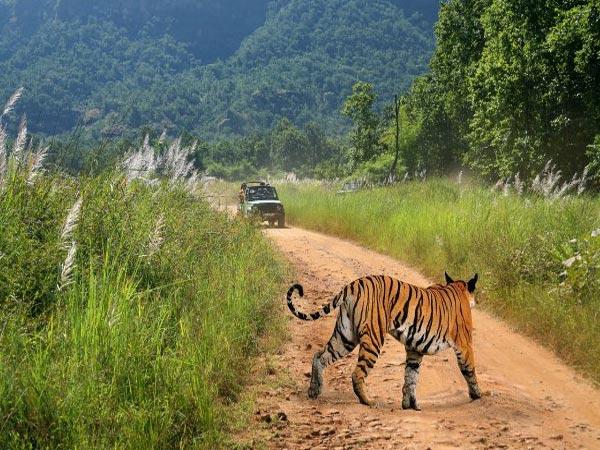 bandhavgarh-national-park_251
